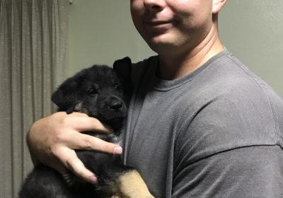 #dogtrainerphoenix #marines #servicedogs #germanshepherddogtrainer