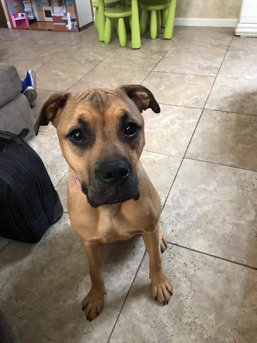 #rescuedogtraining #dogsofbarkbusters #surprisedogtrainer