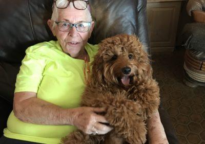 #goldendoodledogtrainer #doodledogtraining #suncitydogtrainer #dogtrainingsuncity