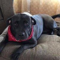 #pitbull #rescuedog #glendaledogtraining #pitbulltrainer